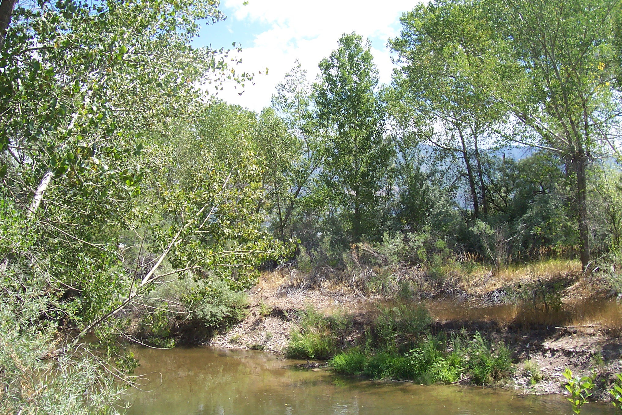 plants and river 010